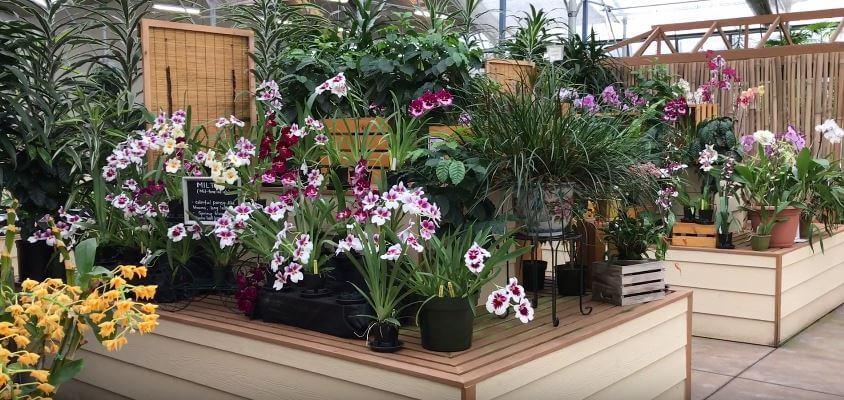 Akatsuka Orchid Gardens plants