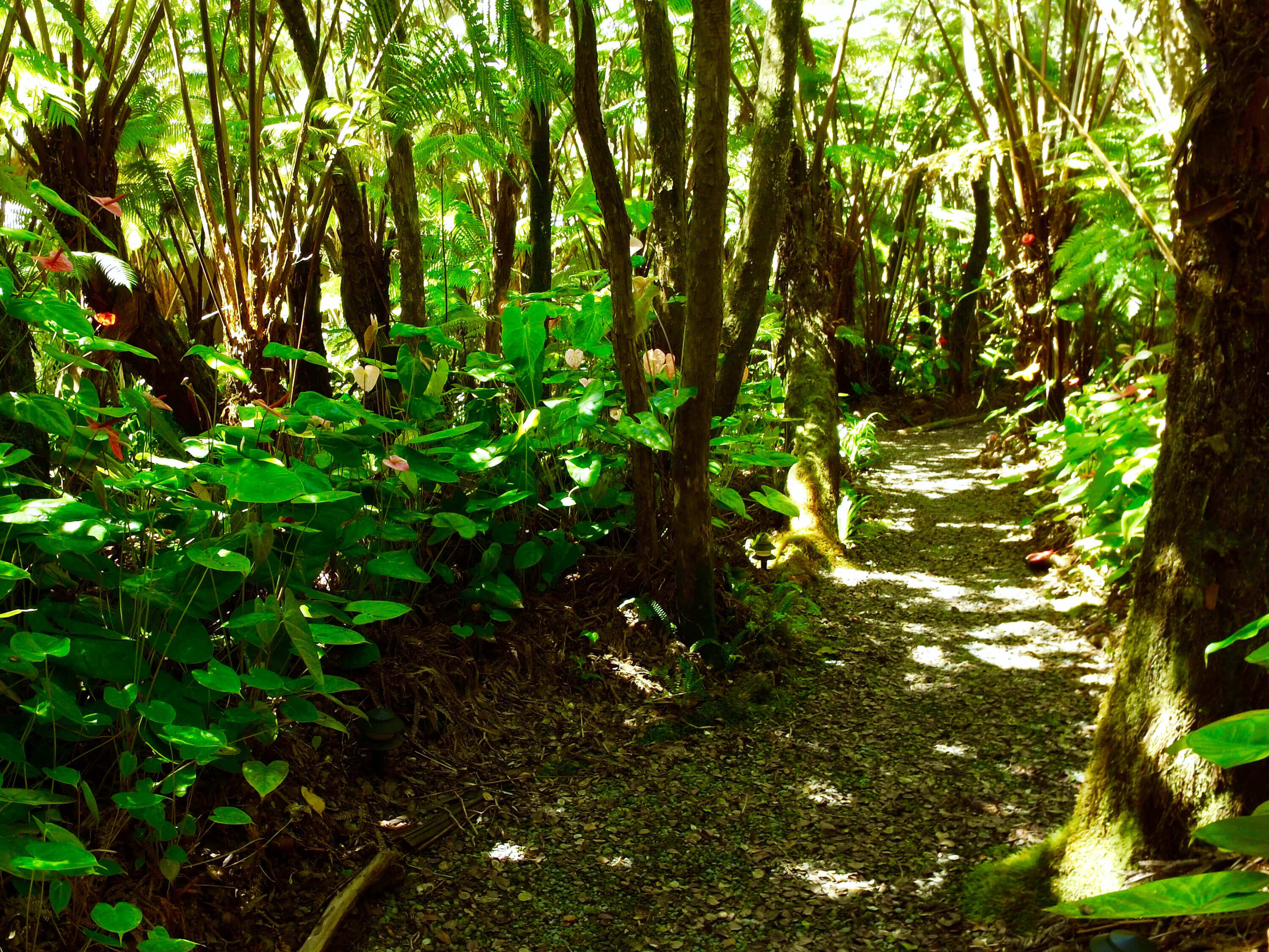 Kilauea hotel-volcano inn-rainforest
