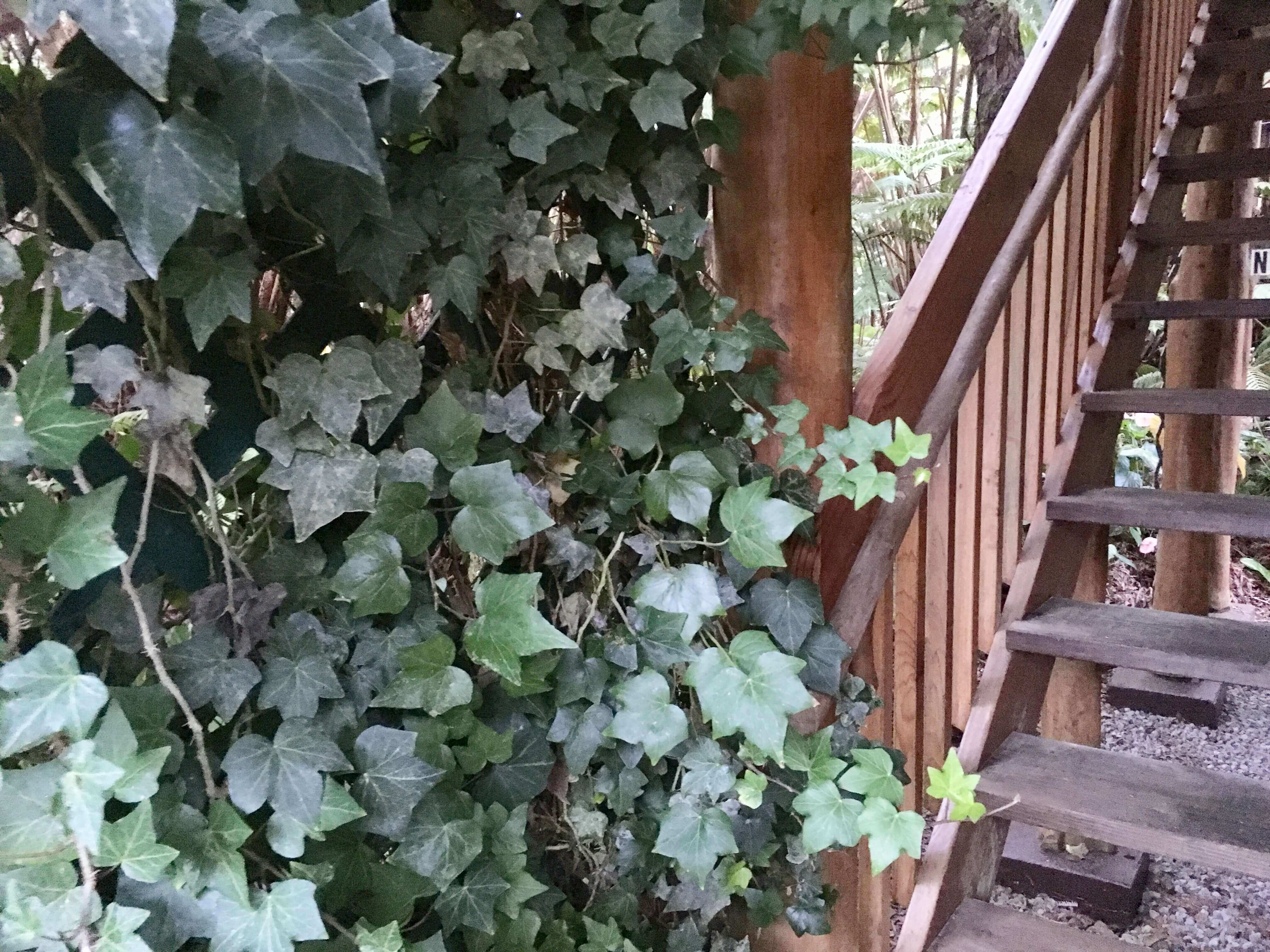 Kilauea hotel-volcano inn - staircase with leaves